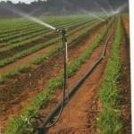 Полив различных сельскохозяйственных культур в течении одного поливного сезона